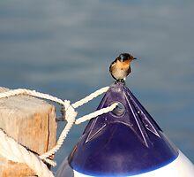 Welcome swallow 2, Monkey Mia jetty by ladieslounge