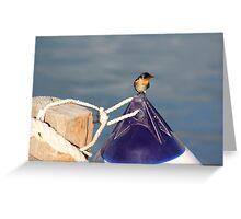 Welcome swallow 2, Monkey Mia jetty Greeting Card