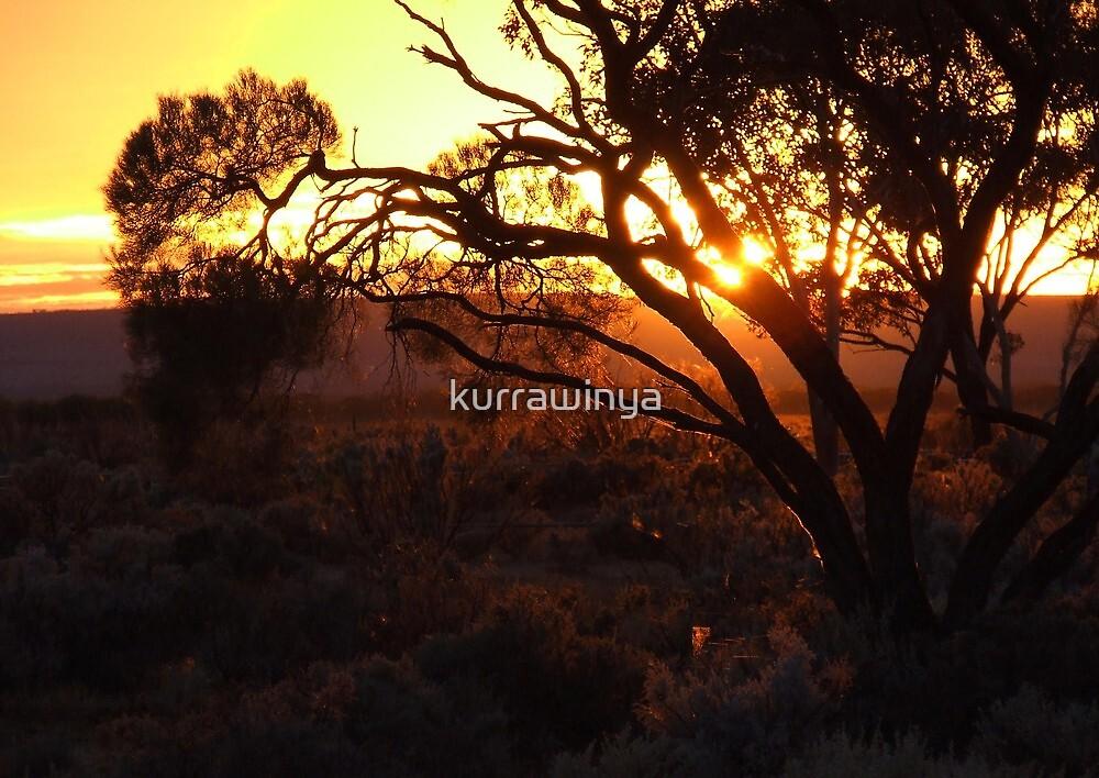 Myall Sunrise by Penny Kittel