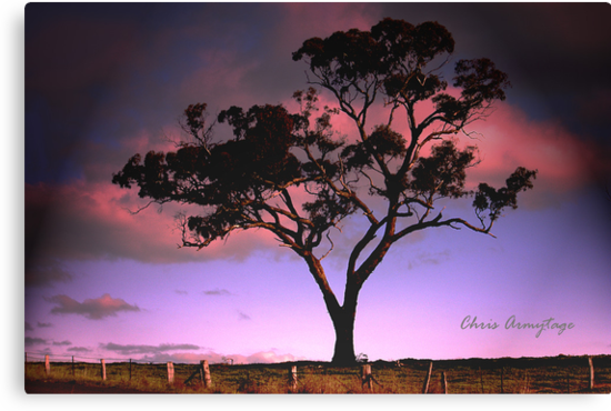 Solitree by Chris Armytage™