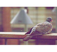 Peeping Dove! Photographic Print