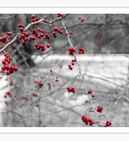 Winter Berries of Arrowtown Sticker