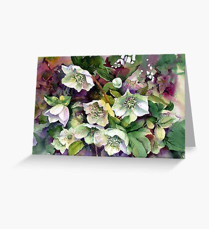 Spring Hellebores Greeting Card