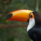 Toucan play that game, Brazil by Martyn Baker | Martyn Baker Photography