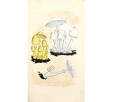 Coloured figures of English fungi or mushrooms James Sowerby 1809 0063 Photographic Print