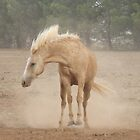Bucking Dust! by Penny Kittel