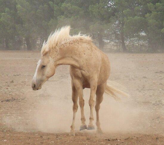 Bucking Dust! by Penny Kittel