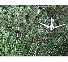 crane 2 Photographic Print