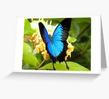 Ulysses Blue Butterfly Mission Beach Greeting Card