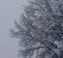 Winter Tree by TanisKetra