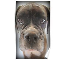 Are There Any Choc Cookies In There? - Boxer Dogs Series Poster