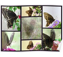 Swallowtail Butterfly Collage Poster