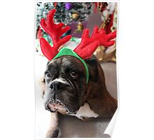Reindeer This Year?...... Anything For That Cookie! - Boxer Dogs Series Poster