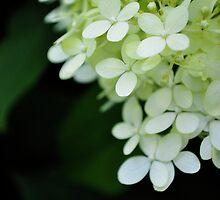 Proximal Petals by EleanorJustice