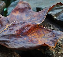 Long Pause ~ Leaf And Stone by EleanorJustice