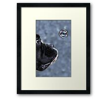 It's A Bubble -Boxer Dogs Series- Framed Print