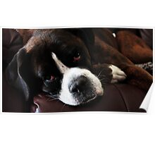 Arwen -Boxer Dogs Series- Update Poster