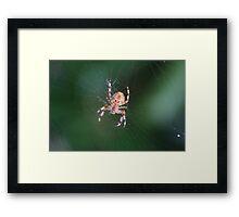 Spider 0790 Framed Print