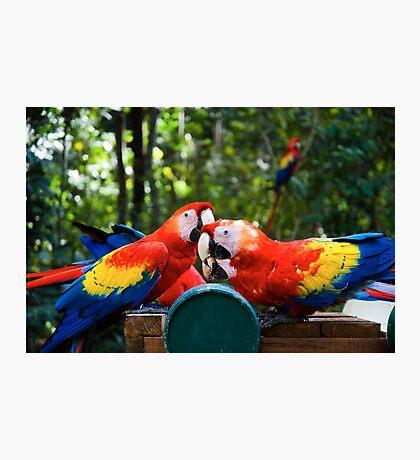 Eating birds Photographic Print