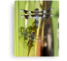 Skimmers are Great With Four Spots or Eight Metal Print