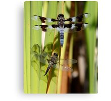 Skimmers are Great With Four Spots or Eight Canvas Print