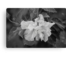 Sleeping flower Canvas Print