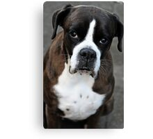Arwen -Boxer Dogs Series- Canvas Print