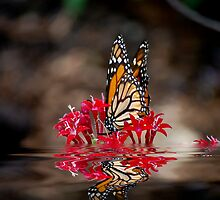 Butterfly and Water by imagetj
