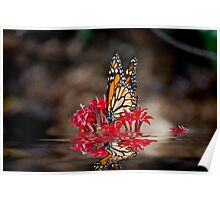 Butterfly and Water Poster