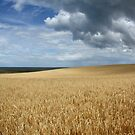 North Norfolk Landscape by FraserJ