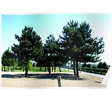 beautifull trees Poster
