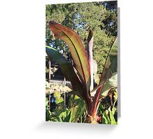 Morning Light Greeting Card