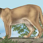 Mountain Lion by SigneNordin