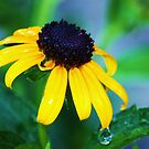 black eyed susan by ANNABEL   S. ALENTON