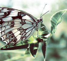 Butterfly in the grass by a1luha