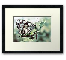 Butterfly in the grass Framed Print