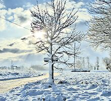 the tree as seen in winter by Paul Hickson