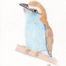 Racquet-tailed Roller for Tony by LadyE