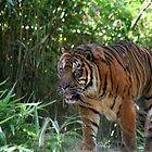 Tiger in the DC Zoo by buster51003