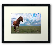 Horse Grazing in a field Framed Print