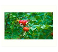 Berry Berry Red Art Print