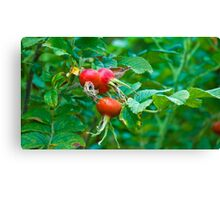 Berry Berry Red Canvas Print