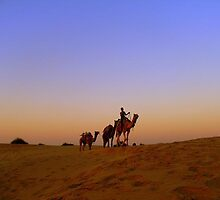 Camel Safari in the Thar Desert by Beata Wilk