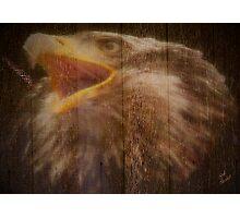 Eagle Fence Photographic Print