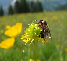 Flower with bug in the mountains near Adleboden Switerland by PevPhot