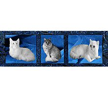 Furry Friends Photographic Print