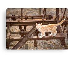 Little kitten...   Canvas Print