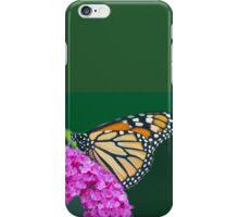 Milkweed Monarch Butterfly iPhone Case/Skin