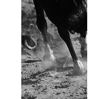Horse 0916 Photographic Print