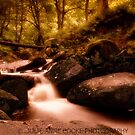 Padley Gorge II by Julie-anne Cooke Photography